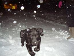 Riley frolicking in one of our rare snows in Atlanta