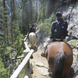 horses, Lake Louise