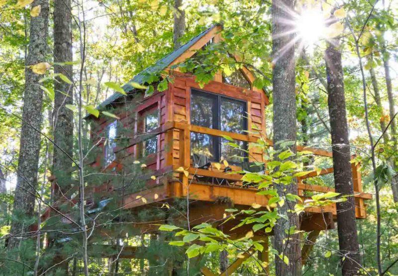 Tiny Pine Tree Cabin treehouse